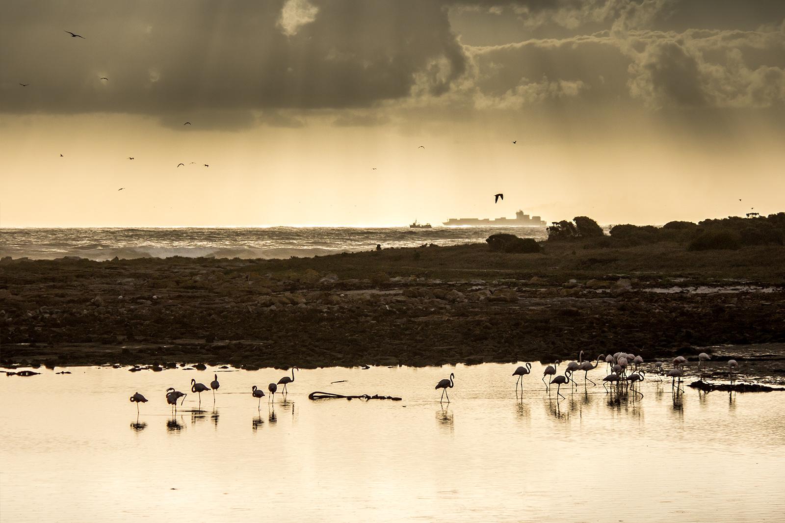 flamingos at sunset IMG_0743 w